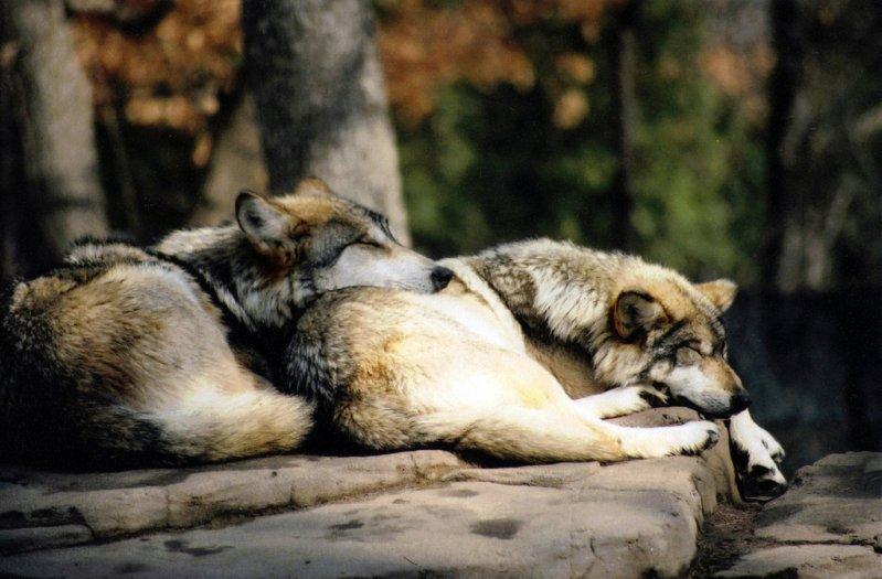 Sleeping beauties5