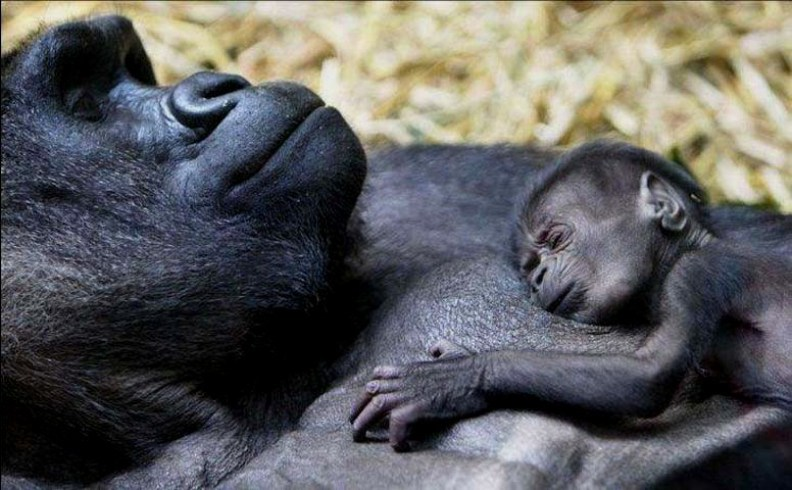 Sleeping beauties9