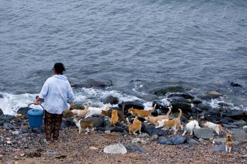 Tashirojima Island(1)-png
