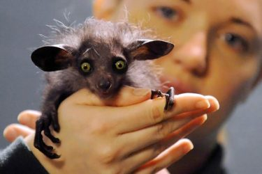 The Ugliest Animal In The Animal Kingdom?