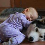 Conversation Between A Siberian Husky & A Baby