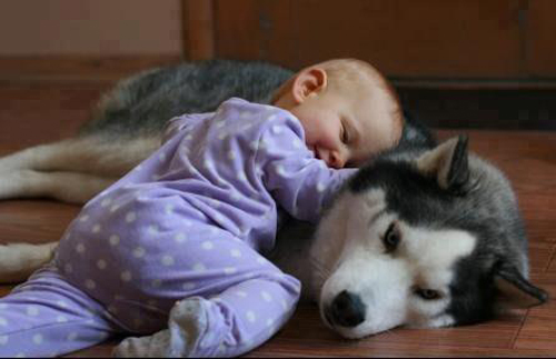 Conversation Betweena Siberian Husky A Baby