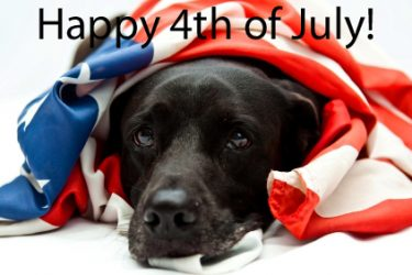 Keep Your Dog Safe On The 4th Of July
