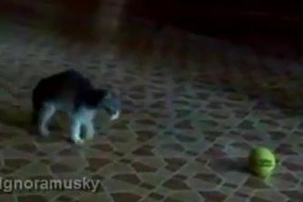 Pug Rescue Austin (pugrescueaustin) on Pinterest