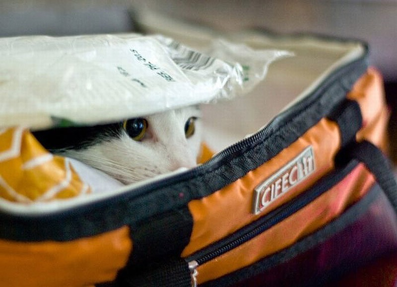 Cat in lunch bag