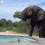 Who Invited the Elephant?