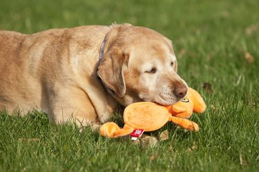 Squeaky Toys That Only Your Dog Can Hear? Yes Please!
