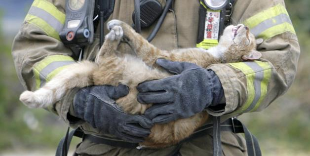 firefighter saves cats life2