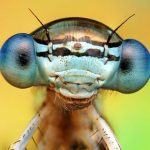 Jigsaw Puzzle: Fly