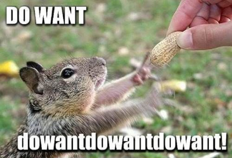funny-squirrel-reaching-nut-excited-do-want-pics