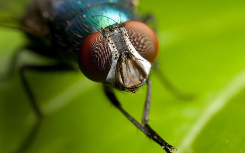 macro insect14