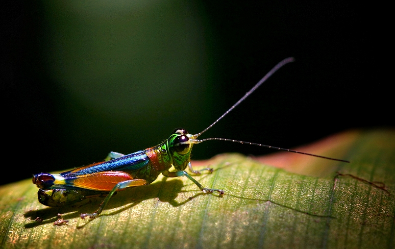 macro insect3
