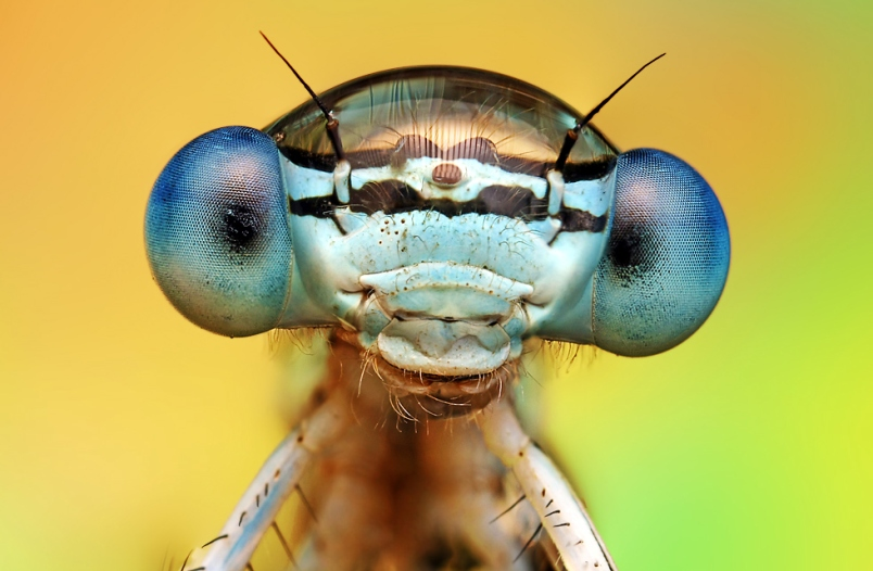macro insect4
