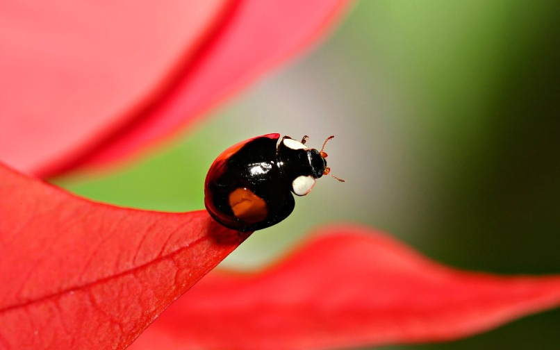 macro insect7