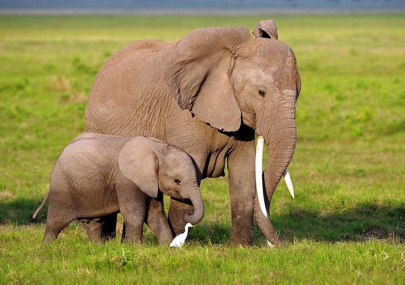 Mini Me Elephant