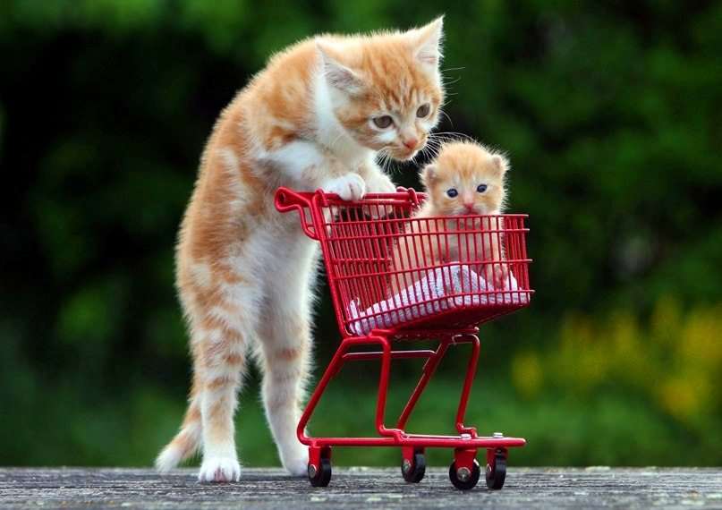 Mini Me Cat