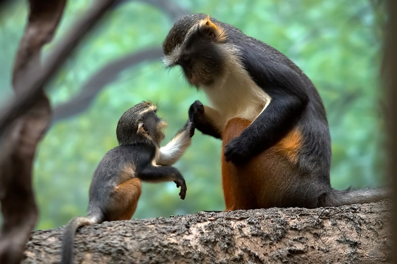 Mini Me Monkey