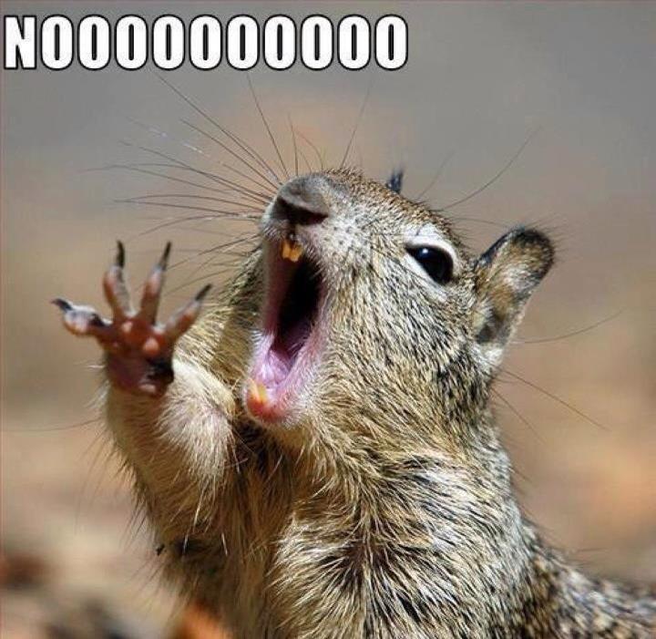 squirrel meme3 squirrel memes,Funny Squirrel Memes