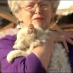 Tornado Victim Finds Her Cat During Interview