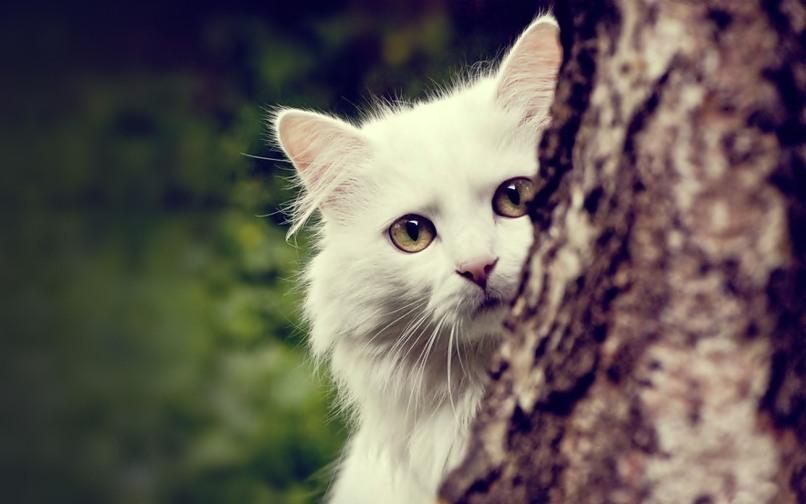 white animals10