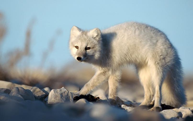 white animals15