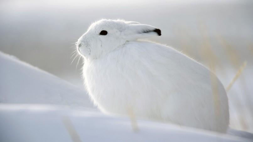 white animals2