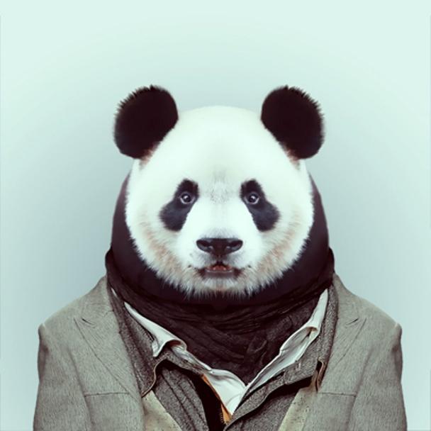 zoo_panda