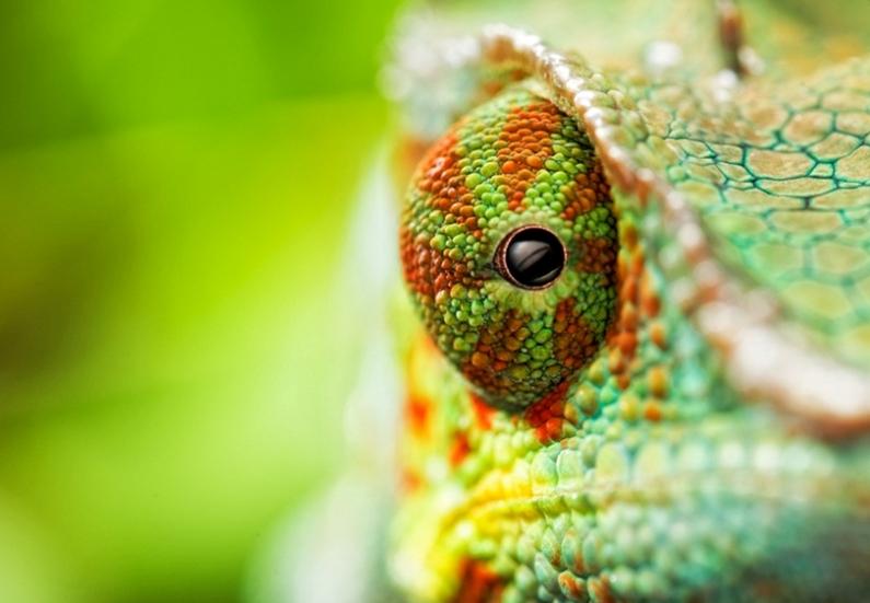 chameleon16