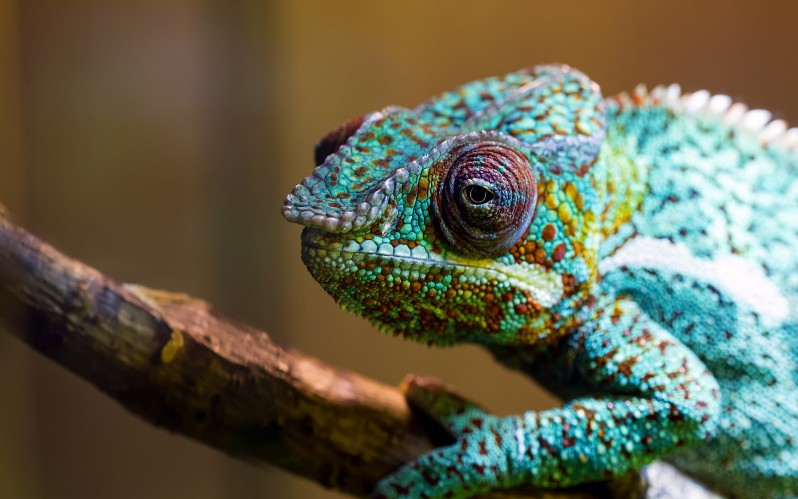 22 reptile hd wallpapers - photo #35