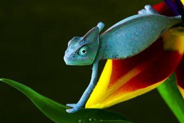 25  Amazing Chameleon Pictures
