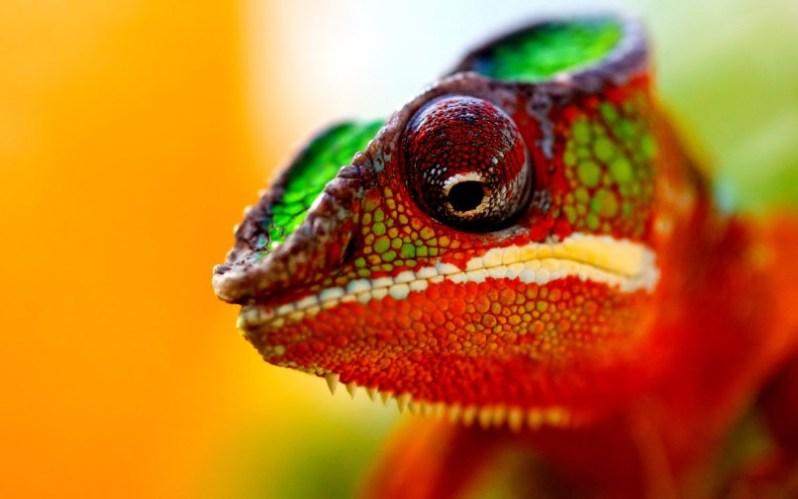 chameleon22