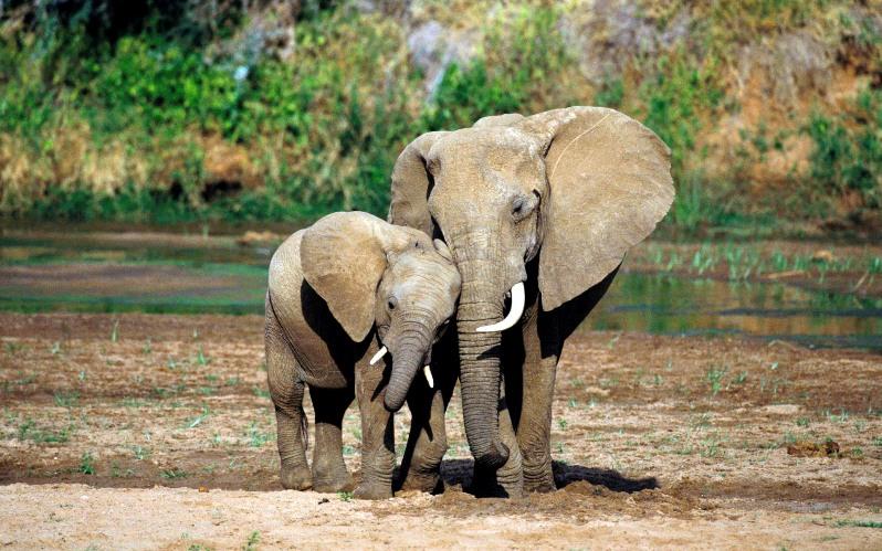 elephants14