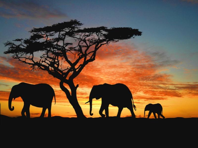 elephants15-png