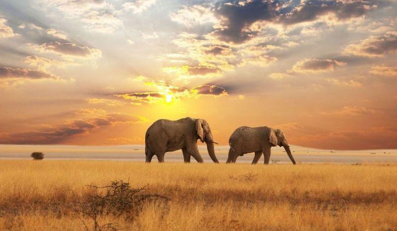 elephants3