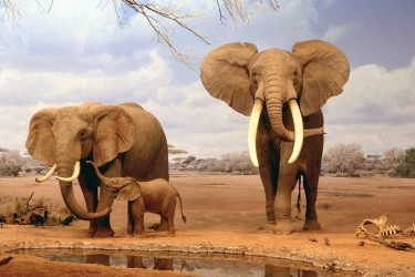 15 Beautiful Elephant Pictures