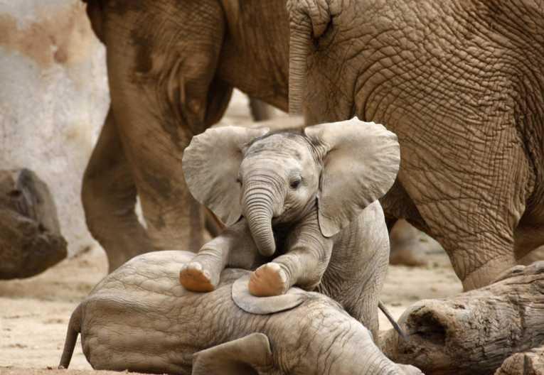 elephants8