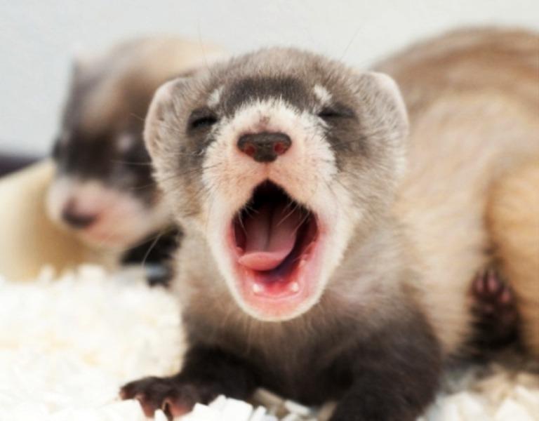 yawning16-png