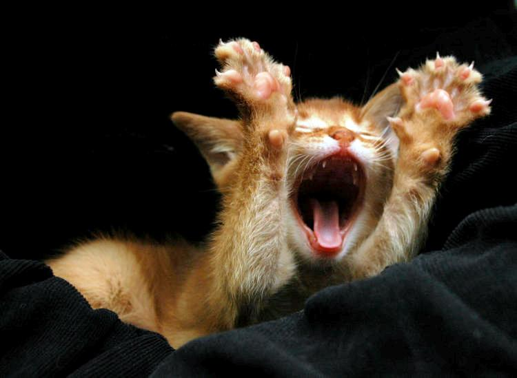yawning baby animals - photo #29