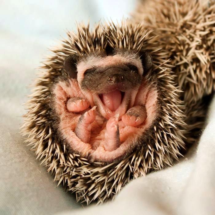 yawning3
