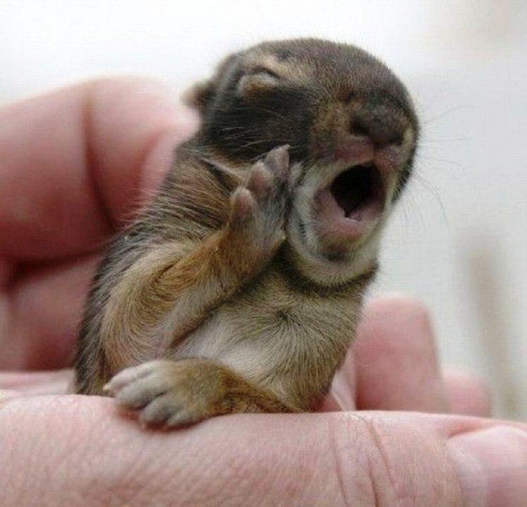 yawning8