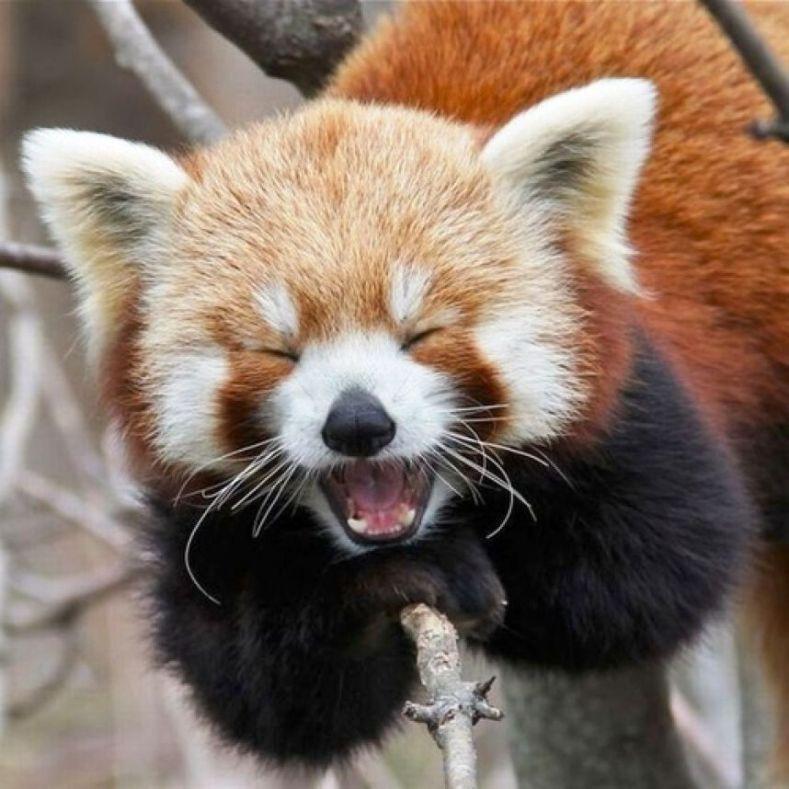 yawning9