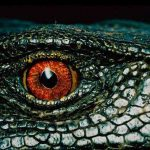Jigsaw Puzzle: Alligator Eye