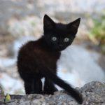 Jigsaw Puzzle: Cute Black Kitten