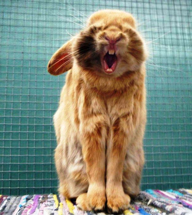 Jigsaw Puzzle: Cute Bunny Yawning