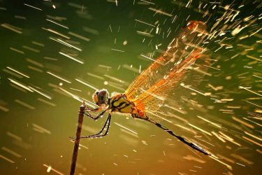 Jigsaw Puzzle: Dragonfly