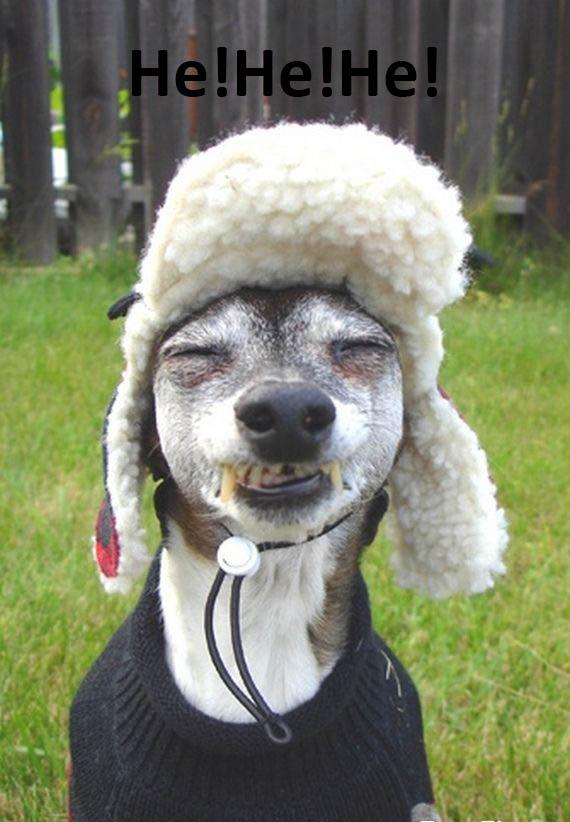 funny dog10