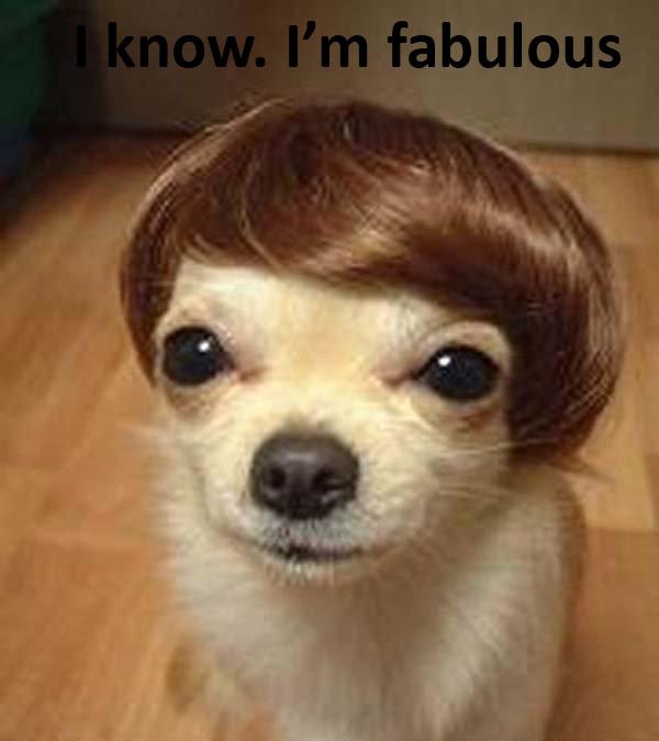 funny dog11