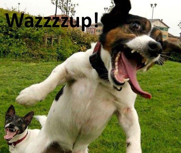 funny dog14