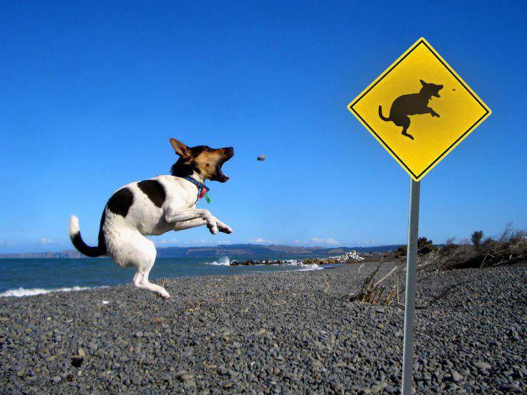 funny dog15