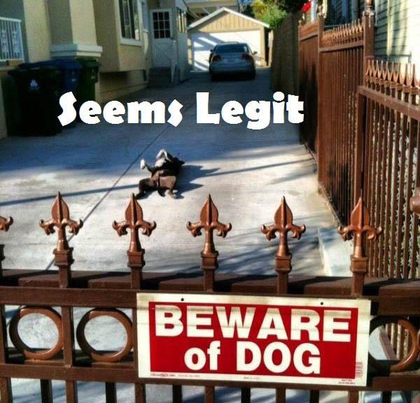 funny dog2